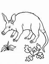 Coloring Aardvark Pages Coloringcafe Printable Colouring Pdf Sheet Nature Printing Stamp Birds Animal Animals Designlooter Button Prints Standard Below Print sketch template