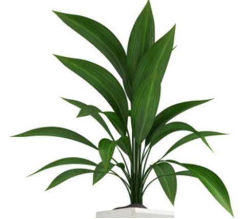guide des plantes qui n 233 cessitent peu de lumi 232 re m6 m 233 t 233 o