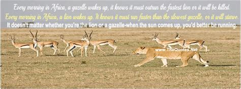 facebook cover image comparison life  lion  gazelle thequotesnet