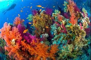 The Epitome Of Coral Reef On Steroids   Ras Mohammed  Yolanda Reef   Sinai  Egypt  Con Im U00e1genes