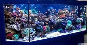 Großes Aquarium Kaufen : meerwasser einstiegtips kurzfassung ~ Frokenaadalensverden.com Haus und Dekorationen