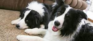 Hundehaare Vom Sofa Entfernen : hundehaare entfernen von sofa bett kleidung tierisch wohnen ~ Bigdaddyawards.com Haus und Dekorationen