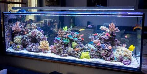 beautiful triton reef  inspiration reefreef