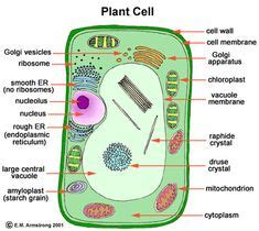 plant animal cell venn diagram venn diagrams