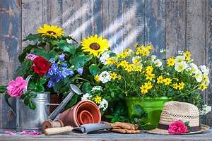 Balkonblumen Richtig Pflanzen : sonniger balkon welche balkonblumen vertragen viel sonne wohnungs ~ Frokenaadalensverden.com Haus und Dekorationen