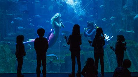aquarium de cineaqua aquarium cineaqua free entry with the pass