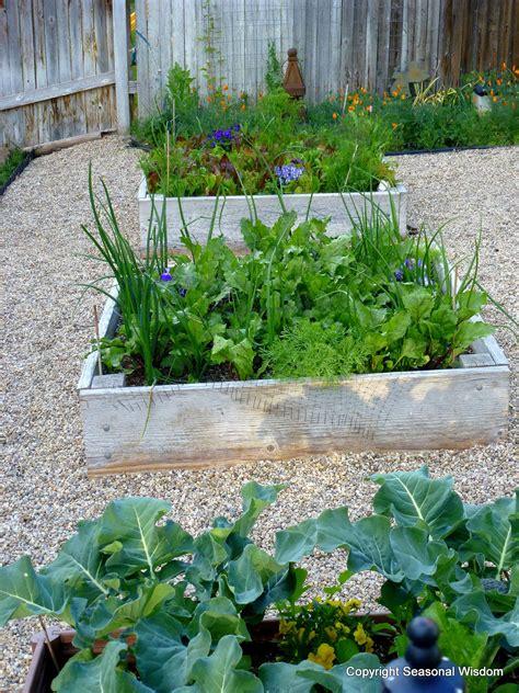 the kitchen garden cool season veggies to harvest now