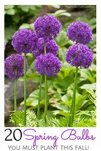 20, Sensational, Spring, Blooming, Bulbs, To, Plant, This, Fall