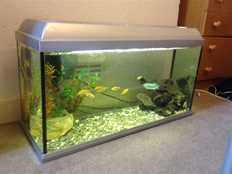 fish aquarium for sale fish tank and fish for sale reading berkshire pets4homes