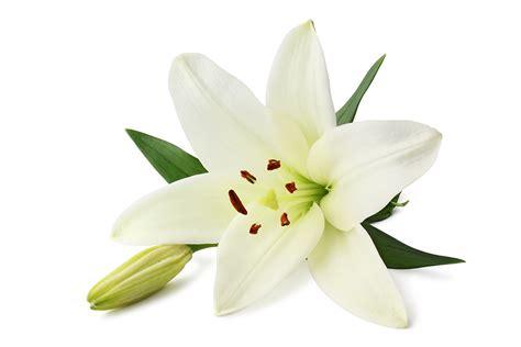 Blumen Und Deren Bedeutung
