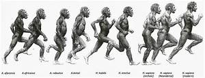 The Ape Who Learned To Run  Were We Born For Endurance