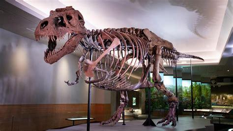 logo bildergalerie dinosaurier fossilien zdftivi
