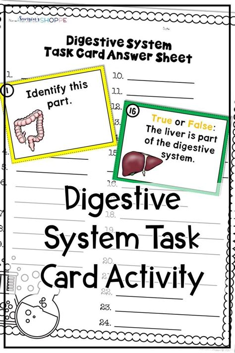 digestive system human body review  parts