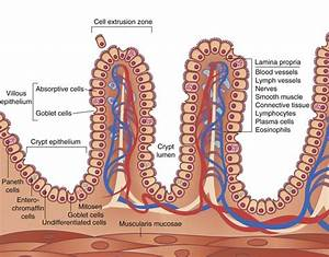 Structures Found In Human Alimentary Canal