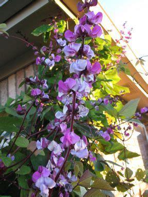 fffbfaffejpg pixels plants climbing flowers garden vines
