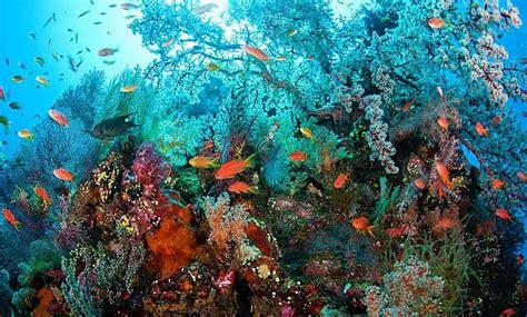 Shipwreck Bali by Diving The Usat Liberty Shipwreck In Tulamben Bali Two