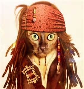 pirate costume for cats 20 of the funniest cats in costumes