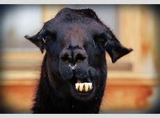 Bildergalerie Lustige Tierbilder Natur mit Humor