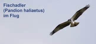 vögel füttern ganzjährig artenschutz start