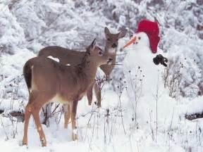 deer and snowman w paper christmas 2008 christmas wallpaper 2825925 fanpop