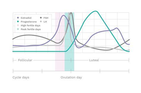 The Ovulation Process