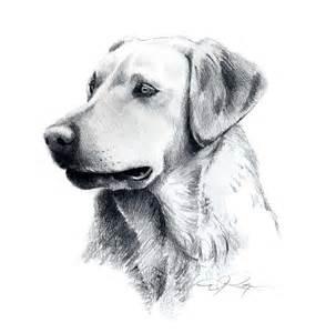 Labrador Dog Pencil Drawing