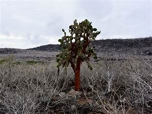 Wo Wachsen Kakteen : leguane kaktusb ume seel wen dieser bericht mit vielen fotos zeigt dass ein besuch der ~ Frokenaadalensverden.com Haus und Dekorationen