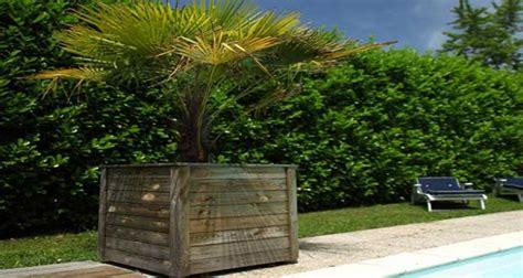 cuisine simulation protéger un palmier comment l 39 abriter des gelées