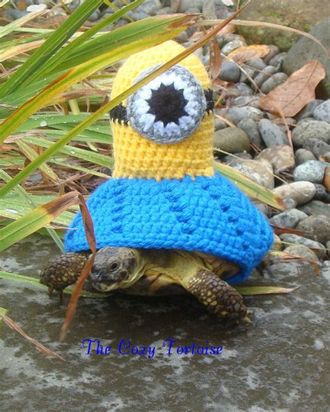 turtle sweaters turtles in sweaters the where to buy