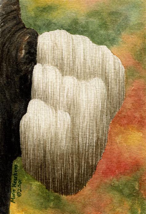 marie heerkens mushroom paintings  drawings