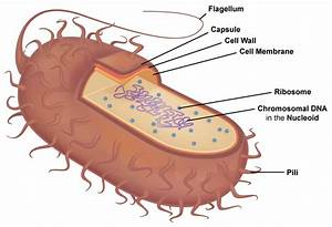 Cell Structure  U2013 General Microbiology