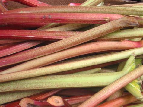 cuisiner rhubarbe en cuisine
