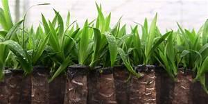 Plante D Intérieur Haute : le yucca la plante haute en couleurs youtube ~ Dode.kayakingforconservation.com Idées de Décoration