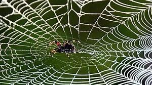 Faire Fuir Les Araignées : le fait divers du jour des araign es obligent une famille fuir sa maison lci ~ Melissatoandfro.com Idées de Décoration