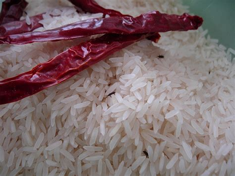 how to get rid of weevils in rice best recipes foods
