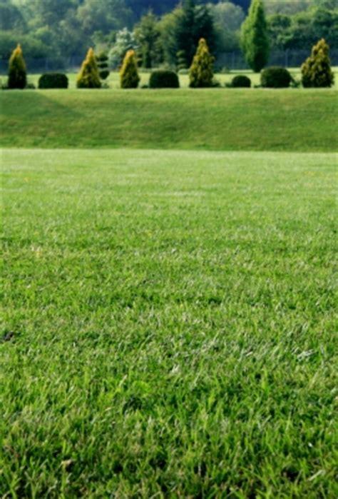 winterschutz für gräser es geht um leben oder tod hesekiel 18 1 4 23 30 32 cornelia trick inspirierende predigten und