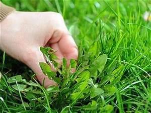 Comment Enlever Les Mauvaises Herbes : comment arracher facilement les mauvaises herbes ~ Melissatoandfro.com Idées de Décoration