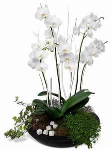 comment soigner une orchidee en pot 28 images comment With déco chambre bébé pas cher avec faire livrer bouquet de fleurs