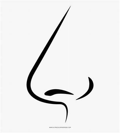 Clipart Nose Coloring Webstockreview Calligraphy Cliparts