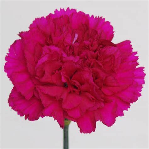 wholesale sim carnations floraco