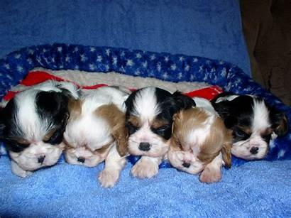 Puppies Puppy Dog Background Wallpapers Screensavers Backgrounds