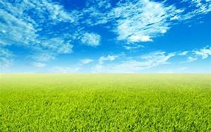 Green field wallpaper - 397074