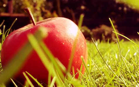 Beautiful Hd Fresh Image by Top 15 Fresh And Beautiful Apple Wallpapers In Hd
