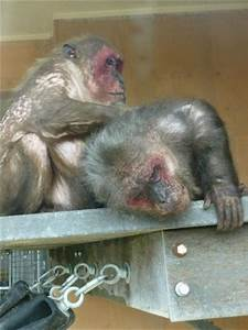 The ugly monkeys (not really ugly) - Picture of Monkey ...