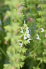 lovelandlocal millet  forgotten grain