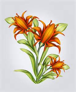 Lilies Flowers with Butterflies Drawings