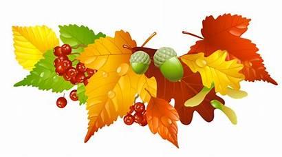 Fall Seasonal Leaves Autumn Acorns Decor Community