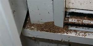 3 signs of flying carpenter ants venus pest company for Winged ants in bathroom