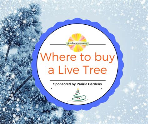 where to buy a live christmas tree sponsored by prairie
