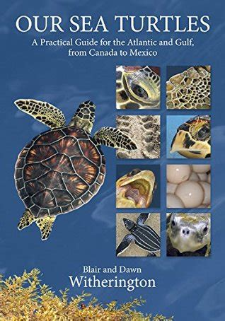 sea turtles  practical guide   atlantic
